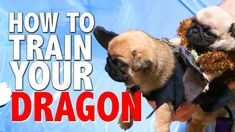 How To Train Your Dragon (Pug Puppy Version)