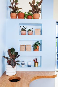 blue wall with bullt in shelves and indoor plants. / sfgirlbybay