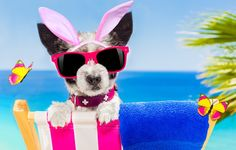 author: grimarika / size: 5616x3744 / tags: dog, glasses, butterfly, bunny ears, beach, funny, beach, happy, vacation, dog, sunglasses