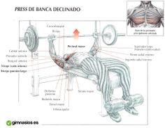 Te gustaria aprender cómo trabajar los pectorales correctamente? http://gimnasios.es/2014/01/como-trabajar-pectorales/ #pectorals #pectorales #press #workout #gym