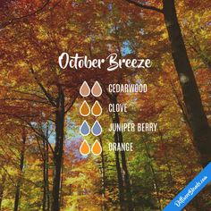 October Breeze - Essential Oil Diffuser Blend