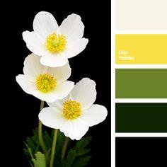Color Palette #3257