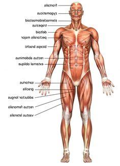 anatomy of body | Human Anatomy HD Wallpaper » FullHDWpp - Full HD ...