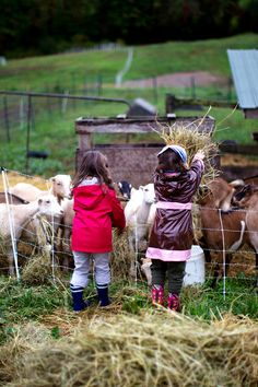 The Goat Farm | La Tartine Gourmande