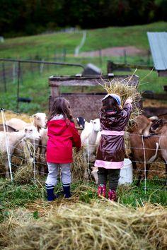 The Goat Farm | La Tartine Gourmande