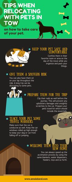 6 Tips When Relocating with Pets in Tow Pet Travel, Travel Tips, Over Sensitive, Pet Safe, Affordable Housing, Condos, Home Staging, Take Care Of Yourself, Infographics