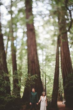 california redwood grove + point reyes national seashore wedding photographs || day after session at The Shalom Imaginative || Los Angeles & Destination Wedding & Family Photography