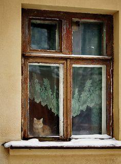 Cat in window, Russia