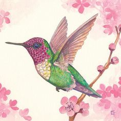 Hummingbird Painting, Hummingbird Tattoo, Hummingbird Sketch, Chalk Drawings, Bird Drawings, Drawing Birds, Animal Drawings, Hummingbird Illustration, Illustration Art