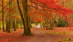 Great locations to catch the autumn leaves - Railcard