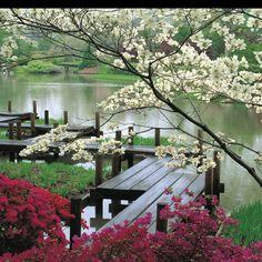 Botanical Gardens, St Louis, MO: Founded in 1859, the Missouri Botanical Garden is the nation's oldest botanical garden in continuous operation and a National Historic Landmark.