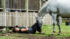 """""""In just under an hour the aim is to connect with one of the horses, going through breathing exercises, before touching and eventually haltering one. It can be quite emotional, and tears are common, but it's an uplifting experience."""""""