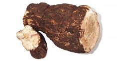 """Tuckahoe (Poria Cocos) - Note: one of the ingredients of the supplement. """"It is an edible pore fungus known in the United States under the Indian name tuckahoe, may reach a diameter of 20 to 25 centimetres. Edible Mushrooms, Stuffed Mushrooms, Chinese Herbs, Body Is A Temple, Traditional Chinese Medicine, Herbal Medicine, Health And Wellness, Herbalism"""
