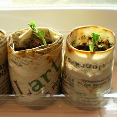 folded newspaper pots- plant the whole thing!