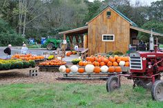 Future Farms, Pumpkin Farm, Old Country Stores, Farm Stand, Harvest Time, Projects For Kids, Homesteading, Fall, Autumn