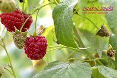 smakuj smaki - przepisy i fotografia kulinarna: Tort czekoladowo-malinowy Raspberry, Strawberry, Fruit, Cake, Fotografia, Pie Cake, The Fruit, Cakes, Strawberries