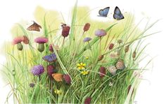 peintres marjolein bastin - Page 3 Nature Artwork, Nature Drawing, Marjolein Bastin, Nature Artists, Dutch Artists, Background Pictures, Funny Art, Artist Art, Watercolor Flowers