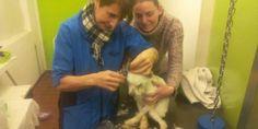 """Udine: nell'angolo del giardino il """"giocattolo"""" dimenticato è un cane (vivo) di 16 anni"""