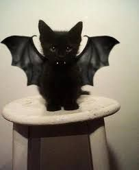 Ready for halloween..