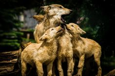 Parenting Photograph by Eric Haugen -- National Geographic Your Shot