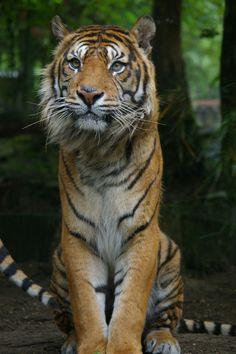 beautiful animal photos, animal photography, beautiful pictures of animals