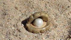 Miniature Garden Oyster Clam with Pearl Cute by DreamingofFaerie