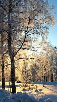 Droga i drzewa w uścisku zimy