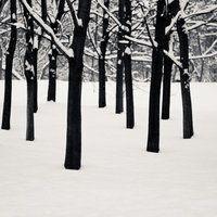 Winter V by Jack070
