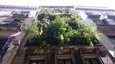 """""""Sin depilar"""" en la calle Portaferrissa de Barcelona."""