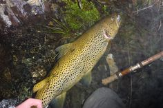 Salmon Fishing, Fly Fishing, Women, Trout, Pisces, Fly Tying, Camping Tips, Woman