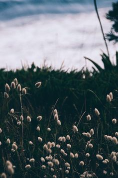 deeplovephotography: instagram | flickr | facebook