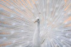 Inspiring photography by Dragan Todorovic