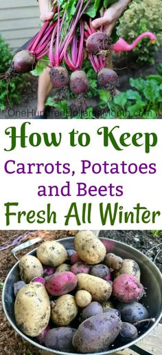 Winter Vegetables, Growing Vegetables, Store Vegetables, Growing Tomatoes, Vegetable Storage, Carrots And Potatoes, Grow Your Own Food, Edible Garden, Organic Gardening