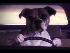 Do dogs chase cats    GEICO Commercial