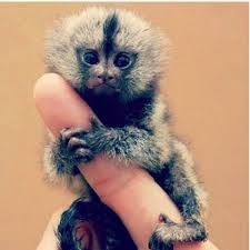 exotic animals - Google Search
