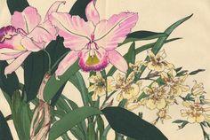 """Цветы Конана Танигами (Konan Tanigami)(1879 - 1928). Лилии. Опубликовано в альбомном варианте """"Western plants and Flowers"""" (""""Растения и цветы запада"""") в Киото. Год изда"""