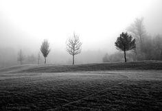 trees and fog II - null