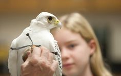 Birds of prey descend at an Oak Park elementary school where students get up and close with falcons