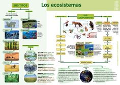 Naturwissenschaften Infografiken - Naturwissenschaften Infografiken – Imágenes efectivas que le proporcionamos sobre diy - Next Generation Science Standards, Science Biology, Sistema Solar, Letter Worksheets, Green Life, Lower Case Letters, Teacher Pay Teachers, Student Learning, Science And Nature