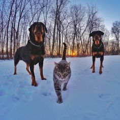 #SB50 #SuperBowl Cats, dogs will collide at halftime of Kitten Bowl III http://www.newsday.com/sports/football/super-bowl/cats-dogs-will-collide-at-halftime-of-kitten-bowl-iii-1.11425911