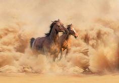 30 perfectas imagenes de caballos - Taringa!
