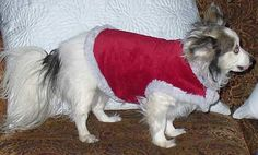 Free Doggie Sewing Patterns - Several Different Dog Coat Patterns +A Rain Coat Too