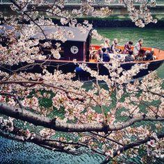 It's cherry blossom season in #Tokyo. Photo courtesy of pthep_sf on Instagram.