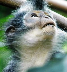 National Geographic Your Shot Gunung Leuser National Park, Lemurs, National Geographic Photos, Primates, Monkeys, Amazing Photography, Animals, Rompers, Animales