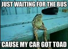 Just waiting for the bus cause my car got toad frog funny amphibian humor Funny Pictures With Captions, Funny Animal Pictures, Funny Animals, Cute Animals, Funny Pics, Talking Animals, Wild Pictures, Funniest Animals, Frog Pictures