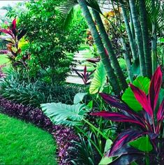 Tropical Garden Landscape Design (Tropical Garden Landscape Design) design ideas and photos To be able to have a wonderful Modern … Tropical Backyard Landscaping, Florida Landscaping, Florida Gardening, Front Yard Landscaping, Landscaping Ideas, Mulch Landscaping, Backyard Ideas, Landscaping Company, Porch Ideas