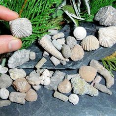 #WS-FSASST Fossil Assortment – Bestcrystals.net