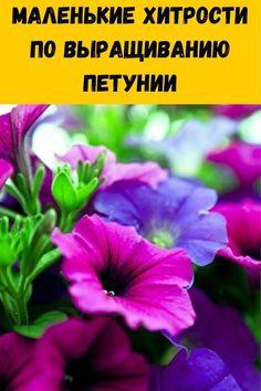 Summer House Garden, Home And Garden, Small Farm, Summer Diy, Vegetable Garden, Container Gardening, Bonsai, Planters, Vegetables