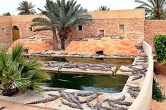 Djerba Island Crocodile Park (South)