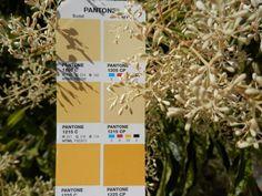 PMS 1215 CP Pms Colour, Pantone, Homes, Colours, Art, Art Background, Houses, Kunst, Home